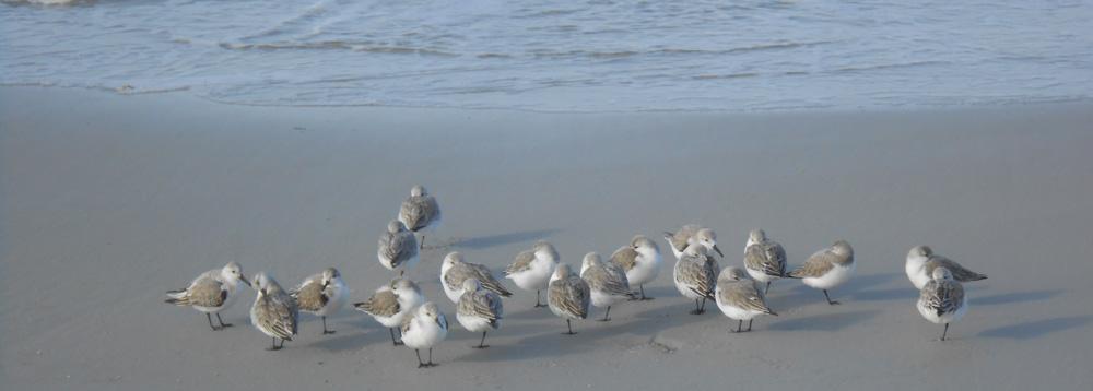 Asilomar-birdies