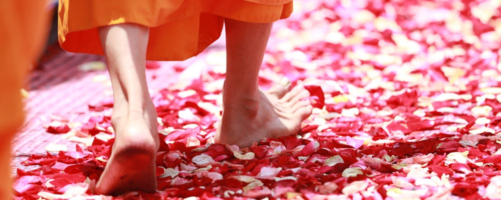 monk-walking-rose-petals