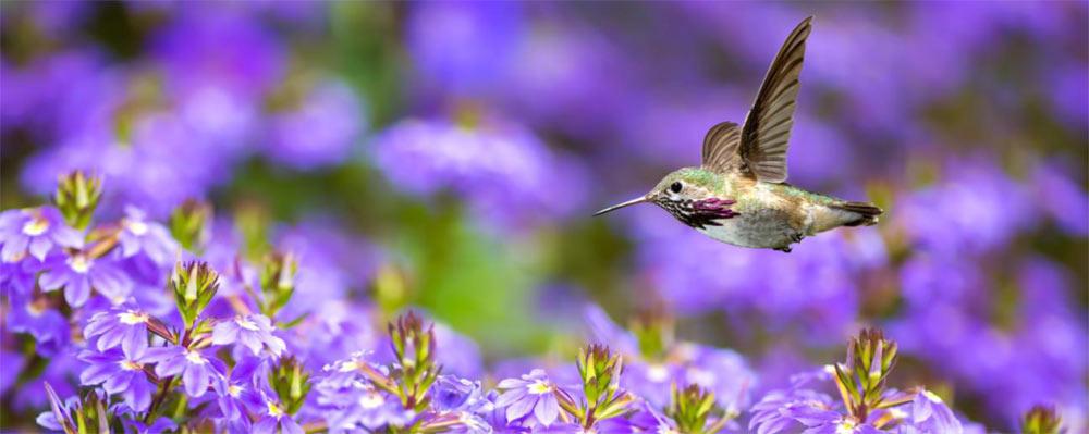 self-transcender-hummingbird